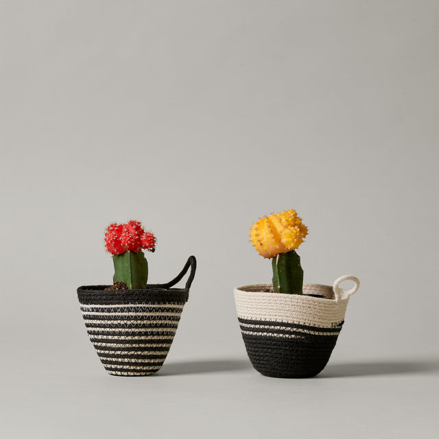 Two mini black and white striped rope planters from MOkun