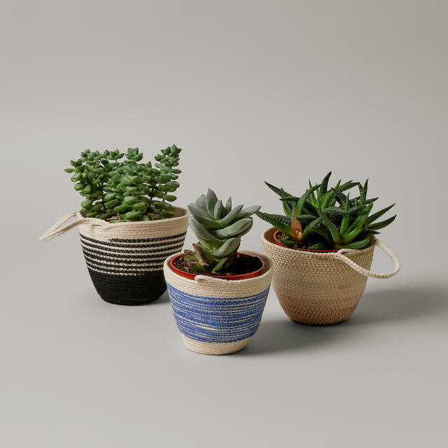 Three small striped rope planters from MOkun. The one on the left is black and white, the one in the middle is dark blue and white, and the one of the right is sand and rose colored.