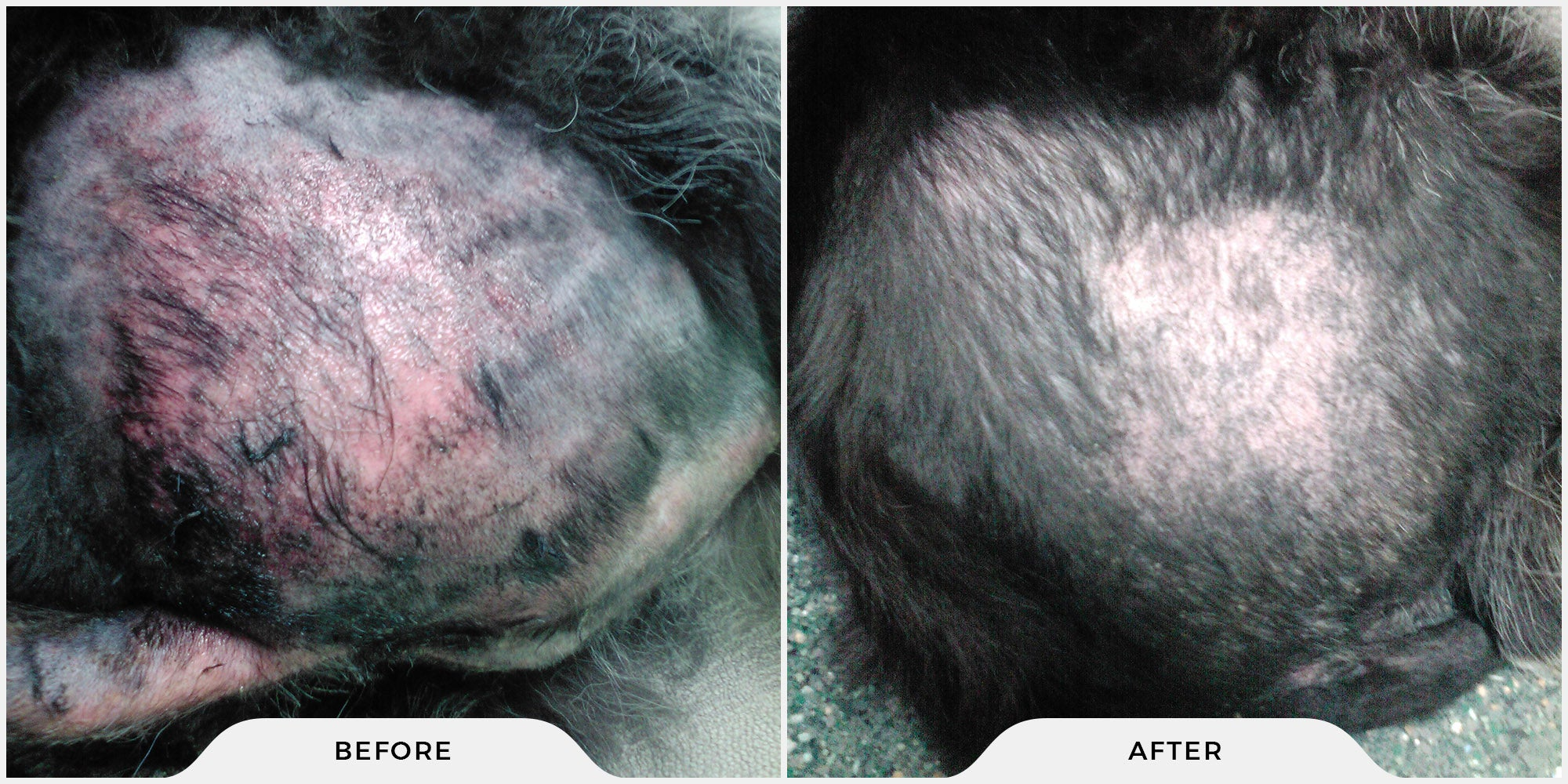 Dog skin condition repair before and after results
