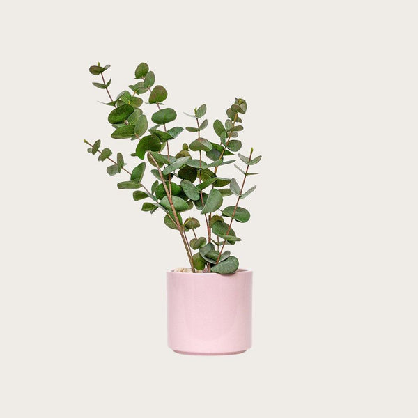 Gian Plant Pot in Pink