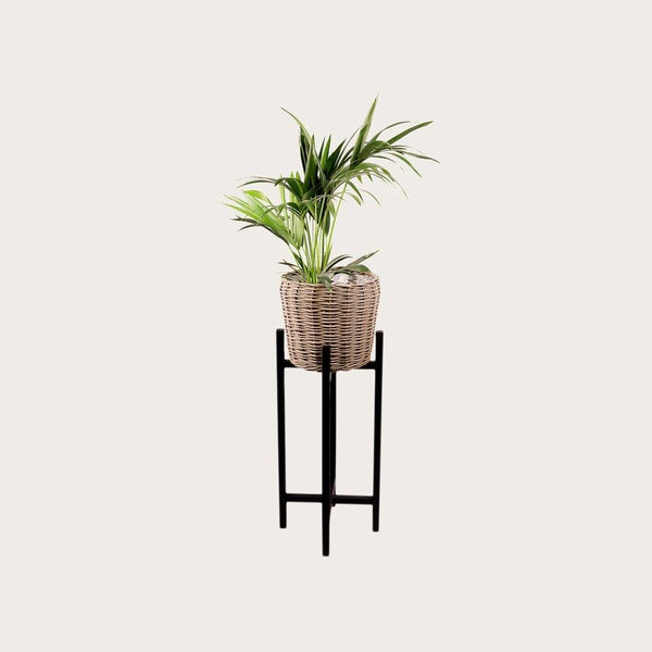 Riccardo Large Willow and Wood Planter