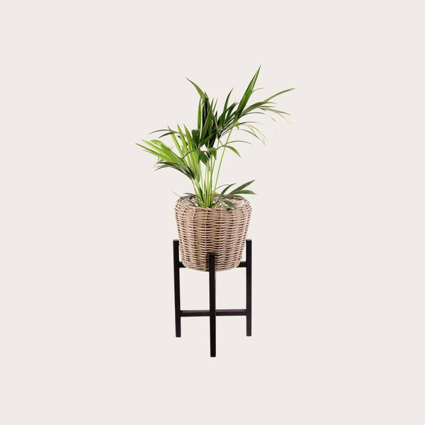 Riccardo Small Willow Basket Plant Stand