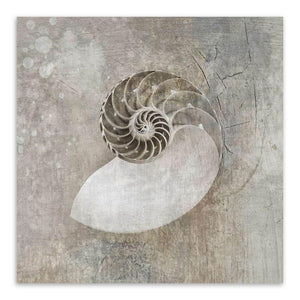 Vintage Sea Shell Prints
