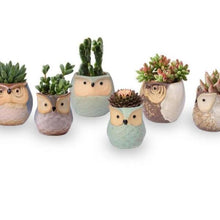 Cute Owl Faced Ceramic Flower Pots