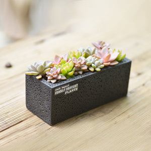 Modern Cement Planter with Iron Stand