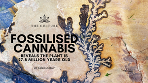 Fossilised Cannabis Reveals The Plant is 27.8 Million Years Old