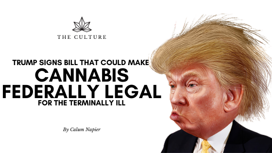 Trump To Sign Bill Which Could Make Cannabis Federally Legal For The Terminally Ill