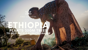 Ethiopia Plants 350m Trees In A Day to Help Tackle Climate Crisis