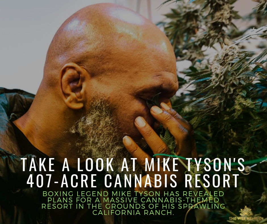 Take A Look At Mike Tyson's Cannabis Resort