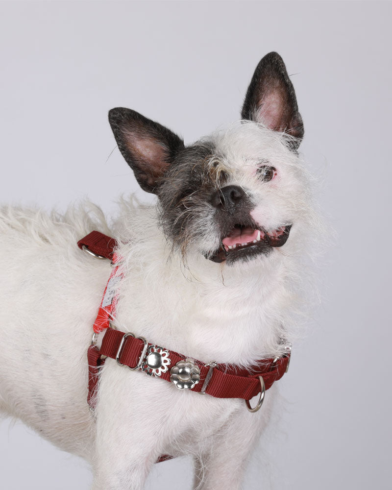 Red & merlot SILVER harness