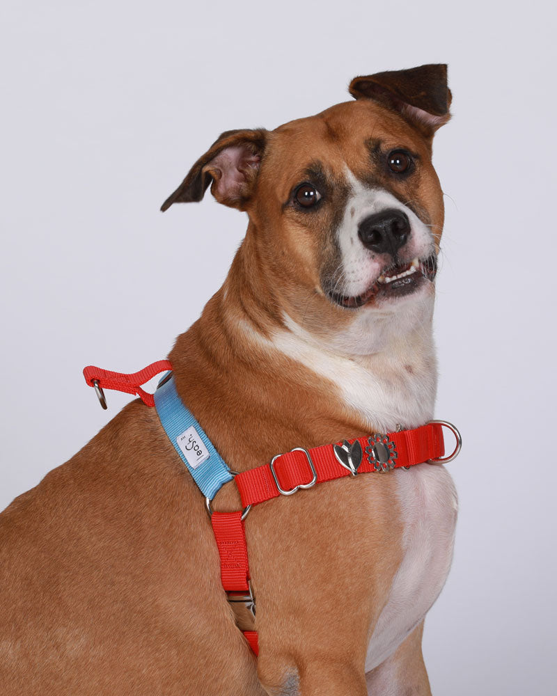 Red & sky harness