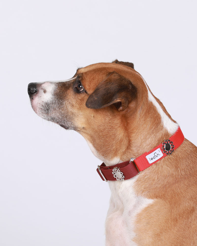 Red & merlot Daily Collar