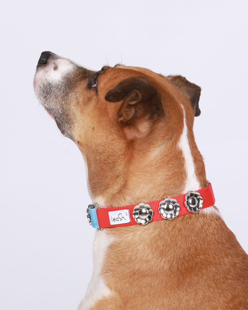 Red & sky Daily Collar