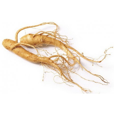 What You Need to Know About Korean Ginseng