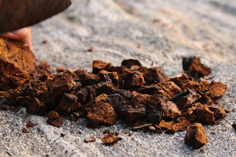Don't Miss Out on These Chaga Recipes