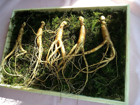 Five Incredible Health Advantages of Korean Ginseng