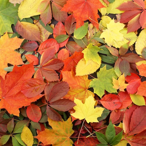 Fall Leaves Fragrance Oil