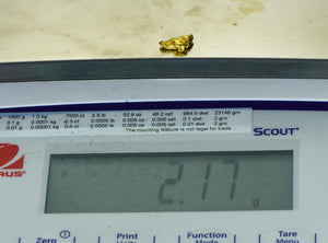 #237 Alaskan-Yukon BC Natural Gold Nugget 2.13 Grams Genuine