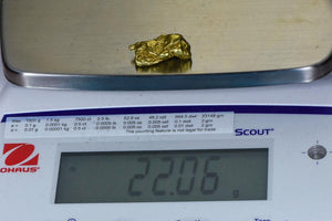 #550 Large Alaskan BC Natural Gold Nugget 22.06 Grams Genuine