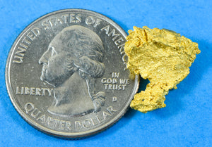 #892 Australian Natural Gold Nugget 1.68 Grams Genuine