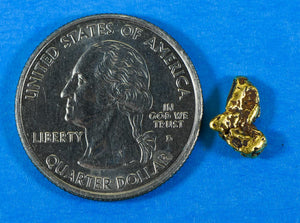 #562 Alaskan-Yukon BC Natural Gold Nugget Pendant 25.90 Grams Authentic