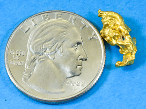 #599 Alaskan-Yukon BC Natural Gold Nugget Pendant 5.09 Grams Authentic