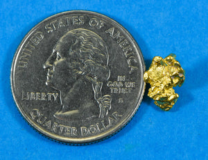#833 Australian Natural Gold Nugget 1.51 Grams Genuine