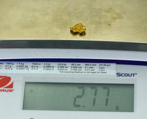 #555 Large Alaskan BC Natural Gold Nugget 35.43 Grams Genuine