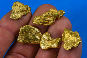 Alaskan BC Natural Gold Nugget 1 Troy Oz. Lot of 5-10 gram Nuggets Genuine B&C Grade