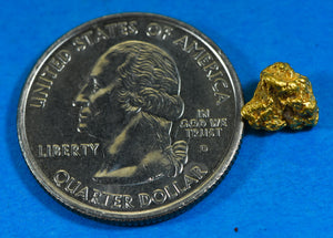 #758 Australian Natural Gold Nugget 1.92 Grams Genuine
