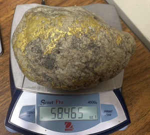 Large Gold Bearing Quartz Specimen Seirra Mining District California 1 818.5 Grams 58.465 Oz Genuine