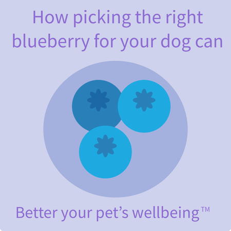 How Picking the Right Blueberries Can Help Your Dog