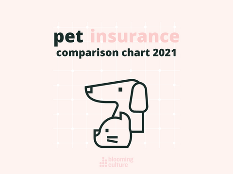top 19 pet insurances for your dog or cat