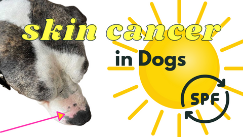 Top 5 Skin Cancers in Dogs