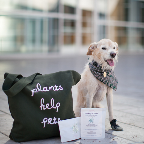 CBD travel pack for dogs | Blooming Culture
