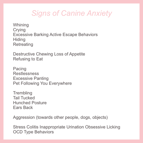 anxiety in pets dog anxiety
