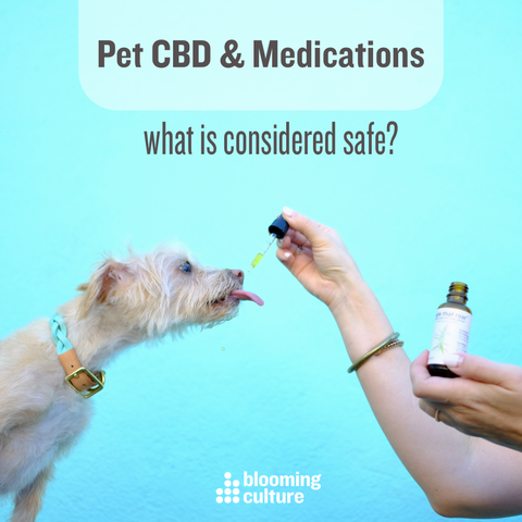 pet CBD and drug interactions