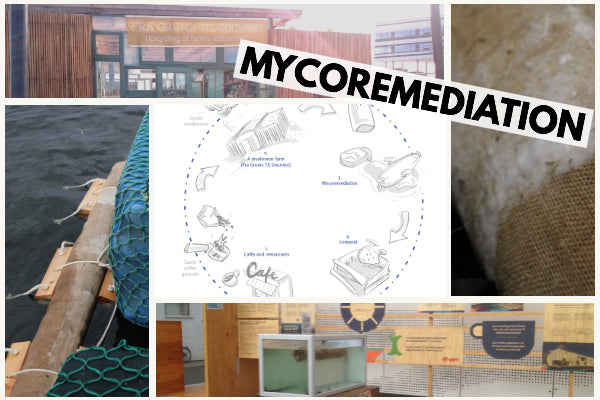 Exciting Mycoremediation Project in Denmark