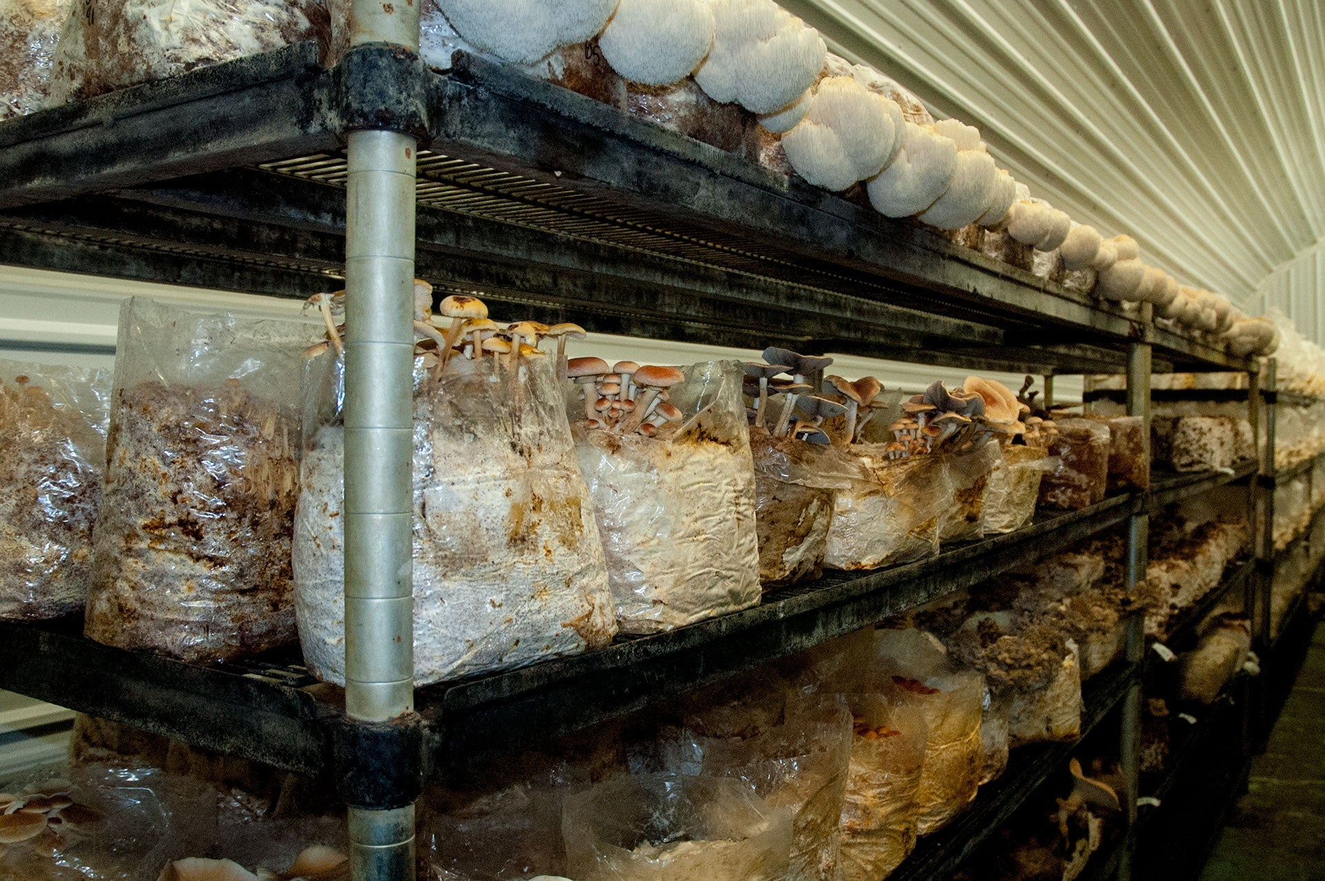 A Simplified Overview of Mushroom Cultivation Strategies — Fungi
