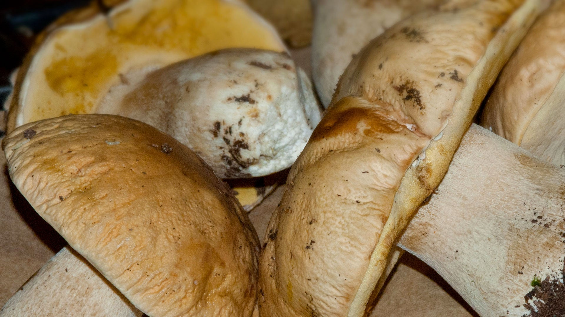 What kind of mushrooms are on the properties and characteristics