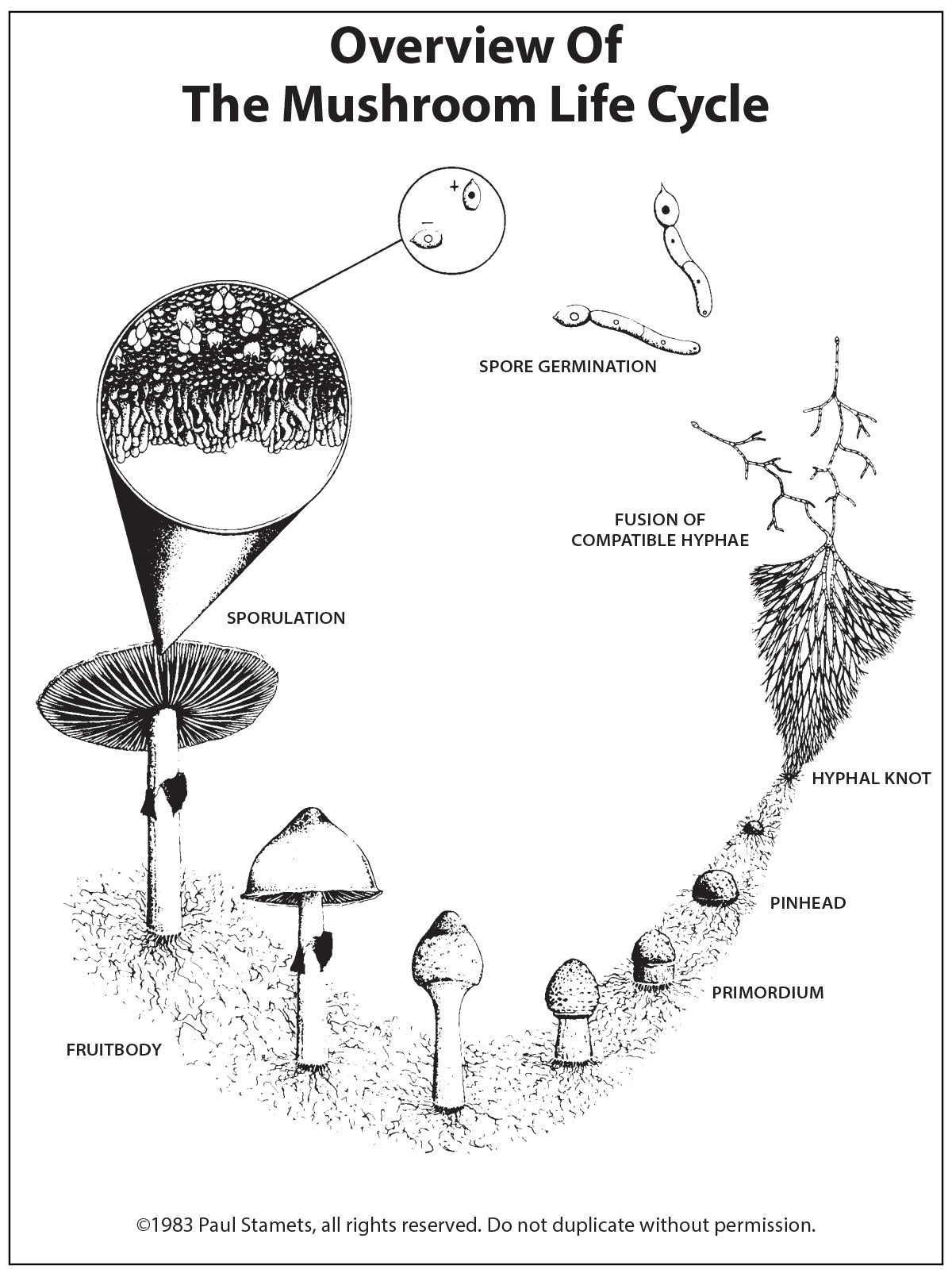 a pictorial overview of the mushroom life cycle fungi perfecti