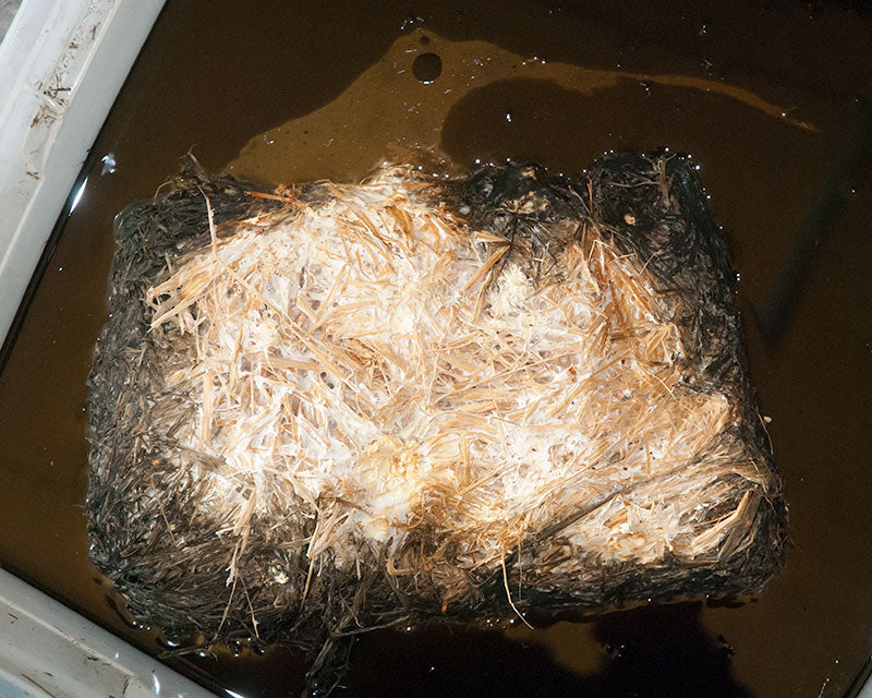 Oil absorption of Oyster mycelium on straw