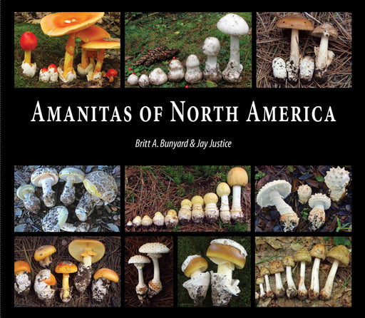Amanitas of North America by Britt Bunyard