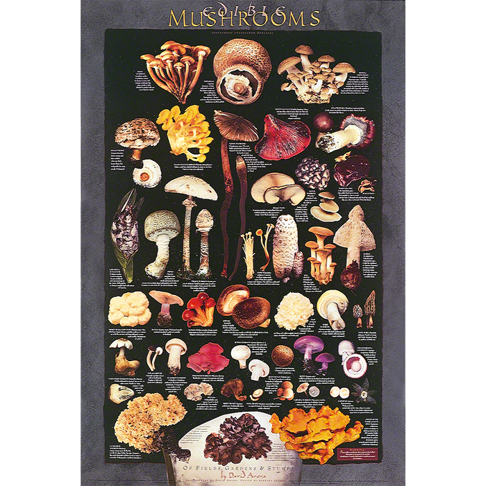 Cultivated Mushrooms Poster