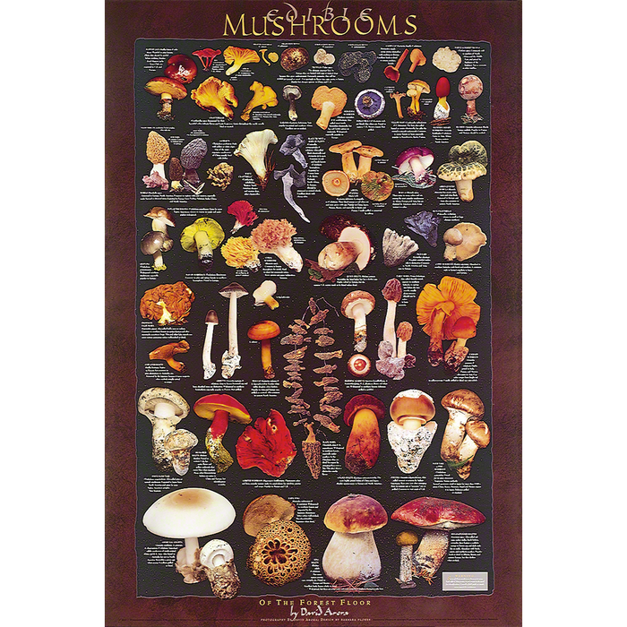 Forest Floor Mushrooms Poster