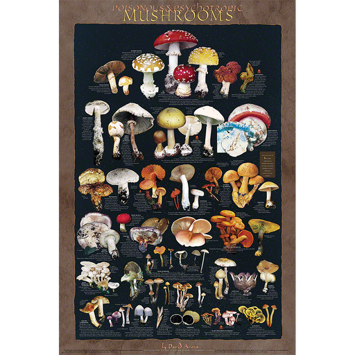 Poisonous and Psychoactive Mushrooms Poster