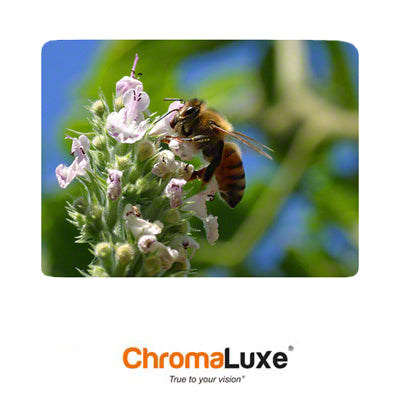 Chromaluxe Aluminum Photo Panel - 11