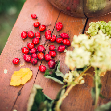 Ingredient Spotlight: Rosehip Oil