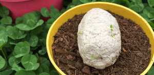 Plantable Seed Bomb Easter Eggs