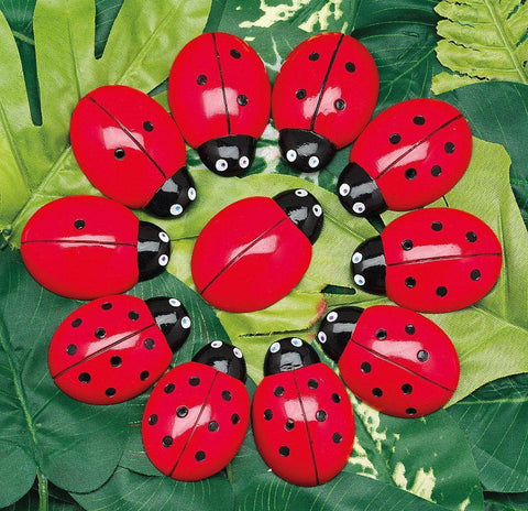 Ladybird Counting Stones